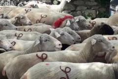 moutons-louis